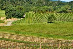 Vineyards in California, USA. Vineyards landscape in California, USA royalty free stock photos