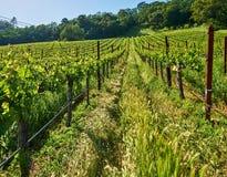 Vineyards in California, USA. Vineyards landscape in California, USA stock photos