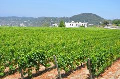 Vineyards campagnia Italy Royalty Free Stock Photos
