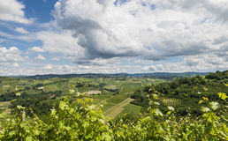 Vineyards of Castiglione Falletto, Barbaresco Piedmont Royalty Free Stock Images