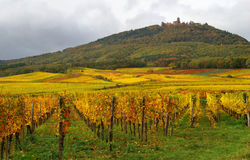 Vineyards & Castle Royalty Free Stock Images