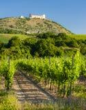 vineyards, castle Devicky, Palava, Moravia region, Czech Republic stock photography