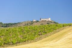 vineyards, castle Devicky, Palava, Moravia region, Czech Republic stock images