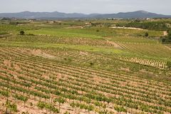 Vineyards in Catalonia. Vineyards in Montferri ( Alt Camp ), Tarragona province, Catalonia, Spain stock images
