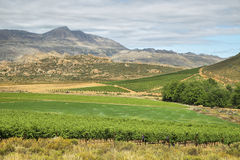 Vineyards in Cederberg nature reserve Royalty Free Stock Photography