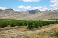 Vineyards in Cederberg nature reserve Stock Image