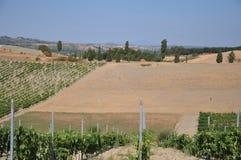 Vineyards certaldo Tuscany italy Stock Images