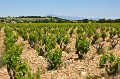 The Vineyards of Châteauneuf-du-Pape Stock Photos