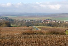 Vineyards, Champagne, France Royalty Free Stock Image
