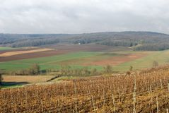 Vineyards, Champagne, France Stock Photo