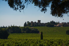 Vineyards in chateau, Châteauneuf-du-Pape, France Stock Image