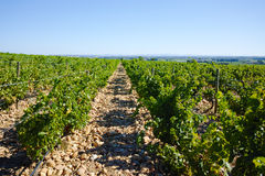 Vineyards in chateau, Chateauneuf-du-Pape, France Royalty Free Stock Photos