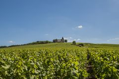 Vineyards with Chavot Church France. The church of Chavot with the vineyards in the Champagne district on a summers day, France Royalty Free Stock Photography