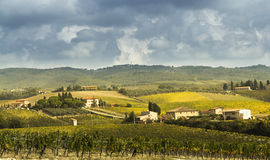 Vineyards in Chianti. A picture of the neat rows of grape vines in the vineyards of Chianti, Tuscany, Italy stock photography