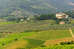 VIneyards of Chianti (Tuscany) Royalty Free Stock Photos