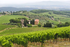 VIneyards of Chianti (Tuscany) Stock Photo