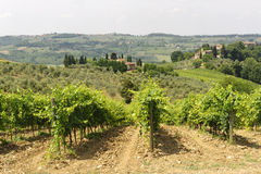 VIneyards of Chianti (Tuscany) stock photos