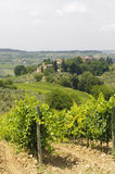VIneyards of Chianti (Tuscany) Royalty Free Stock Images