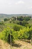 VIneyards of Chianti (Tuscany) Royalty Free Stock Images