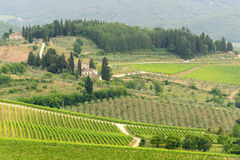 VIneyards of Chianti (Tuscany) Royalty Free Stock Photos