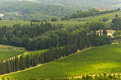 VIneyards of Chianti (Tuscany). Hills of the Chianti region (Florence, Tuscany, Italy) with vineyards at summer stock photos