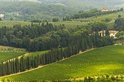 VIneyards of Chianti (Tuscany) Stock Photos