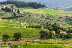 VIneyards of Chianti (Tuscany). Hills of the Chianti region (Florence, Tuscany, Italy) with vineyards at summer stock photo