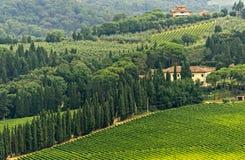 VIneyards of Chianti (Tuscany) Stock Photography