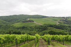 VIneyards of Chianti (Tuscany). Hills of the Chianti region (Florence, Tuscany, Italy) with vineyards at summer stock photography