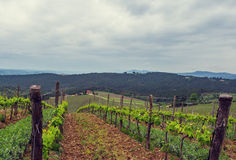 The vineyards of Chianti. Royalty Free Stock Photography