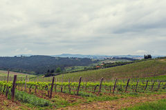 The vineyards of Chianti. Stock Photography