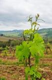 The vineyards of Chianti. Royalty Free Stock Photos