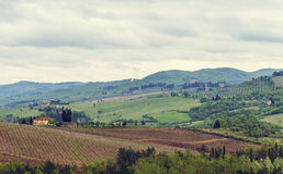 The vineyards of Chianti. Stock Photos