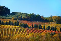 Vineyards in Chianti in Tuscany Stock Photography
