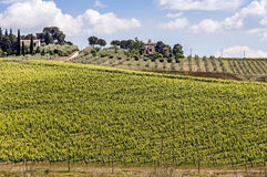 Vineyards of Chianti in Tuscany Stock Photo