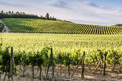 Vineyards of Chianti in Tuscany Stock Image