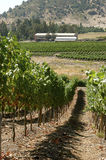 Vineyards in Chile royalty free stock photos