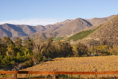 Vineyards of Chile Royalty Free Stock Photo