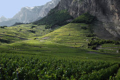 Vineyards at Chomoson in Switzerland Stock Photography