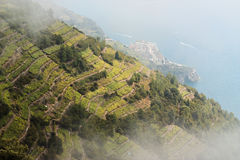Vineyards, Cinque terre, Italy. Stock Image