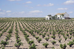 Vineyards in Ciudad Real in Spain Stock Photos