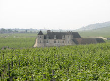 The vineyards of Clos de Vougeot, Burgundy, France Royalty Free Stock Images