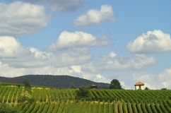 Vineyards and clouds Royalty Free Stock Photography
