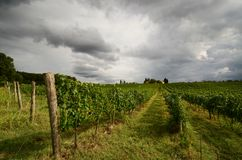 Vineyards with cloudy sky in Tuscany. royalty free stock image