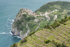 Vineyards on Coast, Cinque Terre, Italy. Outdoor, outside, exterior, exteriors, europe, nature, natural, botany, flora, growth, vegetation, plant, plants royalty free stock images