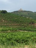 Vineyards at Collioure France Stock Photography