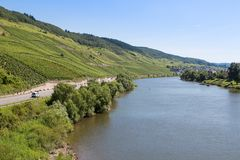 Vineyards along German river Moselle Stock Photos