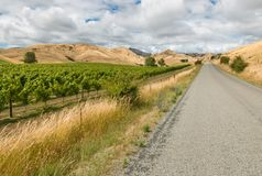 Vineyards with country road in New Zealand Stock Photography