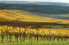 Vineyards in countryside Royalty Free Stock Photography
