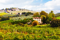 Vineyards in Countryside of Tuscany Italy Royalty Free Stock Photography